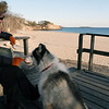 ALLEGRA BOVERMAN/Staff photo. Gloucester Daily Times. Manchester: Kris Miller of Beverly Farms, who just moved to the area from Idaho, eats lunch at Singing Beach with her Siberian Husky, Angus, 5. The surf was very calm midafternoon.