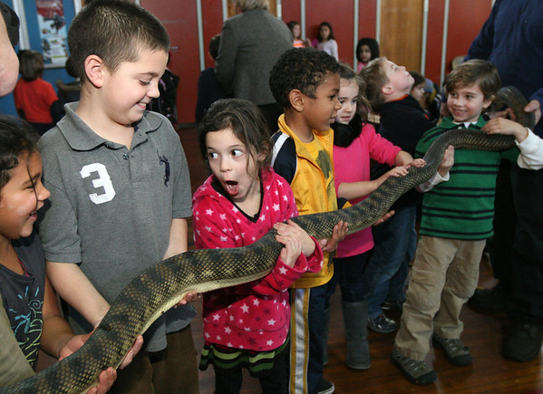 ALLEGRA BOVERMAN/Staff photo. Gloucester Daily Times. Gloucester: The Cape Ann  Vernal Pond Team paid a visit to Beeman Elementary School on Friday afternoon and brought many snakes with them to demonstrate and talk about with the students and staff. Holding and reacting to the 12-foot long Amethystine Python from Australia are, from left: Trinity O'Leary, Marcus Baxter and Alyssa Brown.