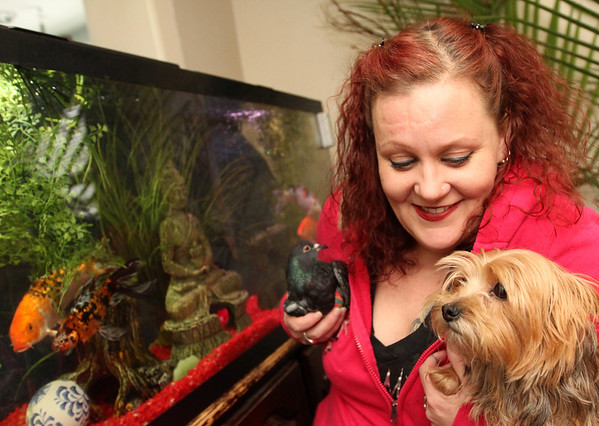 Allegra Boverman/Gloucester Daily Times. Jodi Swenson of Gloucester, a state and federally permitted wildlife rehabilitator, with a few of her animals, including a pigeon, Lumpy, and her Yorkie, Emma, plus goldfish.