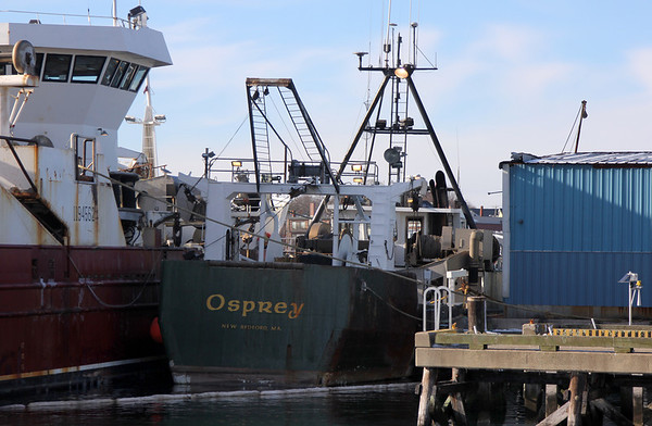 Allegra Boverman/Gloucester Daily Times. A boom was set up around the Osprey, center, a herring trawler, at its berth in Harbor Loop on Thursday. Overnight the vessel went aground at 10 Pound Island, which punctured its fuel tank. The boat was being prepared to be hauled and repaired. Some fuel from the tank washed out towards Rocky Neck off Sumac Lane and was being cleaned up by Enpro, under the supervision of the Coast Guard.