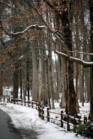 Allegra Boverman/Gloucester Daily Times. Along Old Neck Road in Manchester on Wednesday. According to the National Oceanic and Atmospheric Administration reported that three inches of snow fell in Cape Ann.