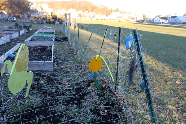 Allegra Boverman/Gloucester Daily Times. About $345,000 has been set  <br /> aside to redevelop and revitalize Burnham Field. This is the community garden there.
