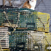 Allegra Boverman/Gloucester Daily Times. A cat sits in the sun atop a stack of lobster traps in East Gloucester on a sunny, mild Tuesday afternoon.