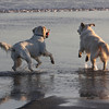 140117_GT_MSP_DOGBEACH_04
