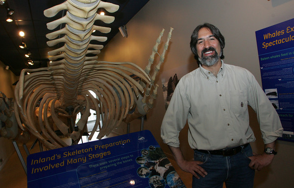Gloucester: Mason Weinrich, executive director of the Whale Centerof New England in Gloucester, is using new software that tracks about 700 whales  to study their behavior. Mary Muckenhoupt/Gloucester Daily Times