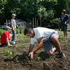 Manchester: Tyler Rossi, 16, of Manchester works on planting winter squash for his Eagle Scout project at his grandparents farm on Bridge Street Friday morning.  The squah is being grown to be donated to The Open Door food pantry in Gloucester. Helping Rossi are Boy Scouts Philip Levensohn, 13, left, Jack Carlson, 12, and John Decker, right, of Manchester troop 3.  Mary Muckenhoupt/Glocuester Daily Times