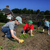 Manchester: From left, Boy Scouts from Manchester troop 3 Tyler Duda, 14, Philip Levensohn, 13, John Decker, 13, and Jack Carlson, 12, help plant winter squash Tyler Rossi's Eagle Scout project at Rossi's grandparents farm on Bridge Street Friday morning.  The squash is being grown to be donated to The Open Door food pantry in Gloucester.  Mary Muckenhoupt/Glocuester Daily Times