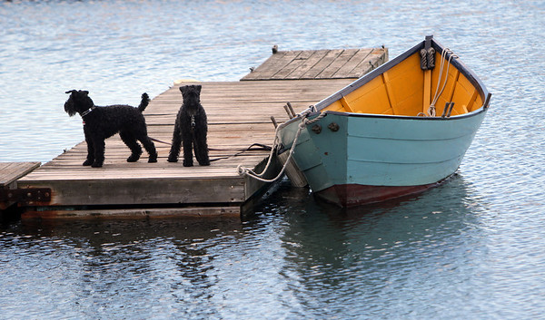 ALLEGRA BOVERMAN/Staff photo. Gloucester Daily Times. Gloucester: Two dogs appear to be waiting to board a dory in Rocky Neck on Wednesday afternoon.