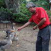 ALLEGRA BOVERMAN/Staff photo. Gloucester Daily Times. Manchester: Supat Sripongsai of Manchester was feeds the geese he has been raising at his house across the street along with some visiting Mallard ducks and other birds. He also ran across the street with feed to lure back from busy Summer Street a large flock of Canada geese who were trying to cross over.