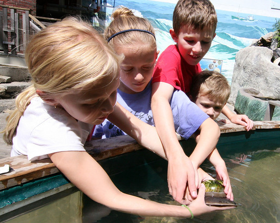 ALLEGRA BOVERMAN/Staff photo. Gloucester Daily Times. Gloucester: Members of the Fortin family, who are summer residents of Rockport, were visiting Maritime Gloucester on Thursday afternoon and were examining lots of sea life in the touch tanks there. Examining a moon snail are from left: Maggie, 8, Molly, 9, Patrick, her twin, and Brian, 6. They are from Winchester. They come to Maritime Glocuester two-three times a summer, it's one of their favorite places to go.