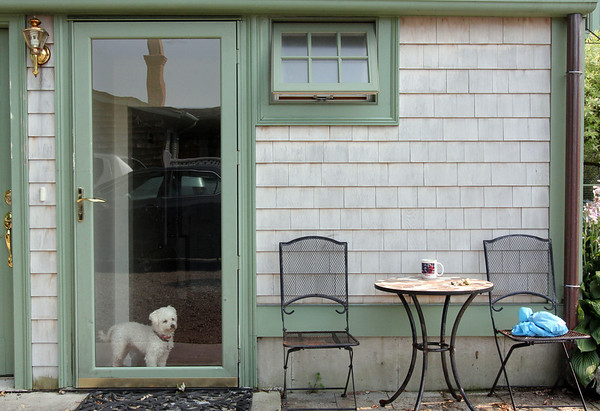 ALLEGRA BOVERMAN/Staff photo. Gloucester Daily Times. Rockport: Max awaits the return of his owners on Friday afternoon in Rockport.