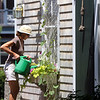 ALLEGRA BOVERMAN/Staff photo. Gloucester Daily Times. Rockport: Carol Delaney of 6 Norwood Avenue in Rockport waters and tends to her garden on Thursday. Her gardens are on the Coastal Gardens tour on Friday and Satuday in Rockport.