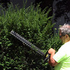 ALLEGRA BOVERMAN/Staff photo. Gloucester Daily Times. Rockport: Steve Ranta of the Department of Public Works of Rockport, trims the shrubs at Community House in Rockport on Monday afternoon.