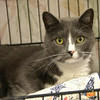 Pip, Cape Ann Animal Aid's pet of the week