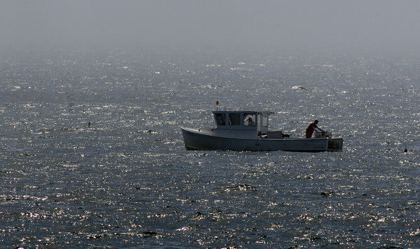 PAUL BILODEAU/Staff photo. A lobstermen pull in their traps off of Pebble Beach in Rockport Monday morning.