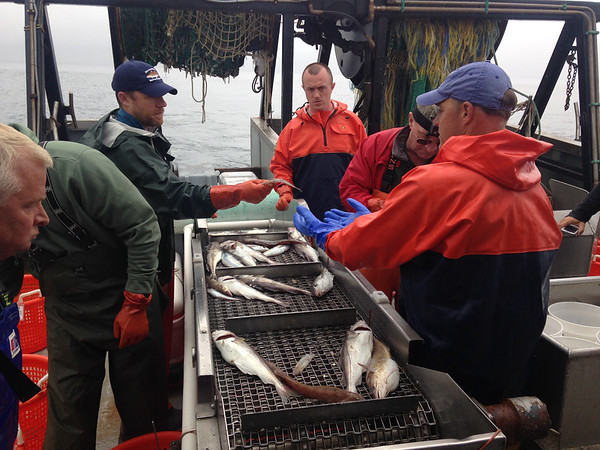 SEAN HORGAN/Staff photo<br /> State officials George Peterson, center right, and Matthew Beaton help DMF staff and the Miss Emily crew sort the catch from the first trawl.