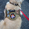PAUL BILODEAU/Staff photo. Veteran Don Boldt's service dog, Nic, waits on the dock prior to leaving on a fishing trip. Dave Marciano of Wicked Tuna and Tom Orrell of the Yankee Fleet  hosted a fishing trip to benefit the Wounded Warrior Project.