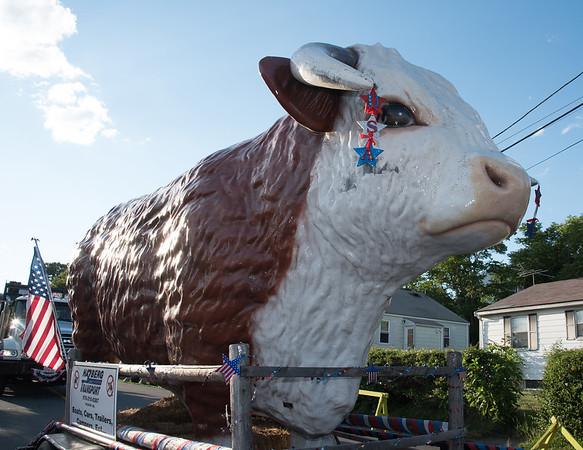 Desi Smith Photo.     A big steer in the Fishtown Horribles Parade Sunday afternoon.     July 3,2016