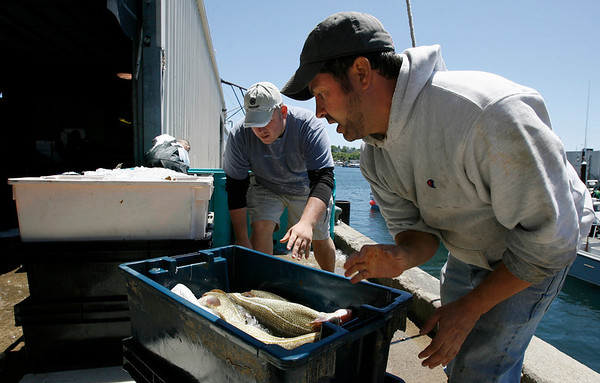 Gloucester: Dan Glynn helps Peter Libro unload cod from Libro's boat, Dolores J, at the Gloucester Seafood Display Auction yesterday. Yesterday was the first day of the fishing season for dayboats. Photo by Kate Glass/Gloucester Daily Times Monday, June 1, 2009
