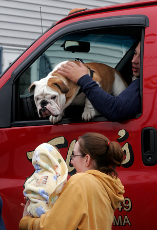 Gloucester: Tonka peeks out at pedestrians on Commercial Street while riding with Jeff Stuart in a Tally's tow truck last week. Photo by Kate Glass/Gloucester Daily Times Tuesday, June 24, 2009