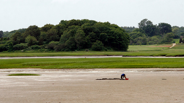 Essex: A clammer digs in mud flats off Conomo Point yesterday afternoon. Photo by Kate Glass/Gloucester Daily TImes Thursday, June 18, 2009