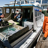 Gloucester: Brian Richie, left, Paul Cohan, center, and Chris Jacques, right, prepare to unload their catch at the Gloucester Seafood Display Auction yesterday morning. Photo by Kate Glass/Gloucester Daily Times Monday, June 8, 2009