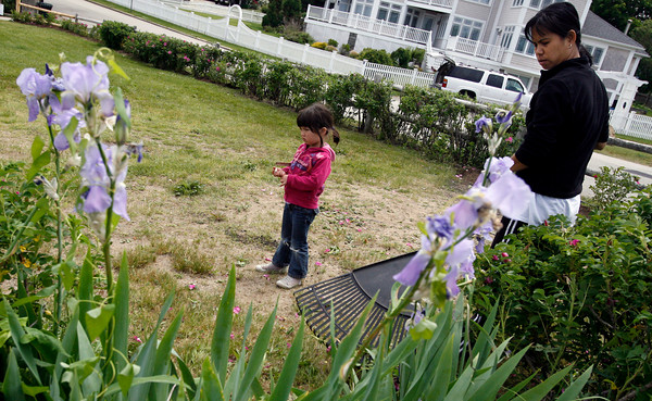 Rockport: Abigail Mellen, 4, searches for small flowers in the grass at Old Garden Beach as her mother, Wiline Mellen, rakes up debris during a volunteer cleanup on Saturday. Photo by Kate Glass/Gloucester Daily Times Saturday, June 6, 2009