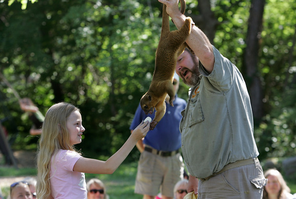 "Rockport: Richard Rotth holds a kinkajou out for Anya Aase, 8, to feed a banana to while learnign about rainforest animals at Millbrook Meadow Wednesday afternoon.  The program, presented by Creature Teachers, is part of the Rockport Public Library Summer Reading Program ""Go Green at Your Library."" Mary Muckenhoupt/Gloucester Daily Times"