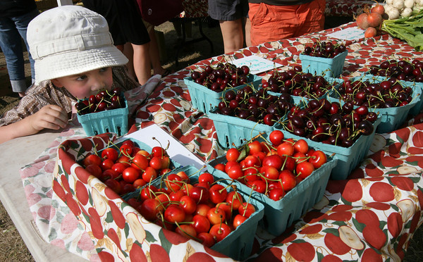 Gloucester: Jackson Altieri, 4, of Gloucester smells the cherries at Farmer Dave's stand at the Cape Ann Farmer's Market yesterday afternoon. The market, which is now located at the I-4, C-2 lot on Rogers Street, runs every Thursday through the summer. Photo by Kate Glass/Gloucester Daily Times