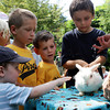 "David Le/Gloucester Daily Times. From left, River Lacroix, 3, Daniel Merc, 7, Edward Merc, 5, and Sean Brown, 9, pet a rabbit that ""Awesome"" Robb Preskins, also known as Captain Robbie Bones, had pulled out of a trick box during the Sky Pirate Show at Millbrook Meadow Park in Rockport on Wednesday afternoon. 6/29/11."