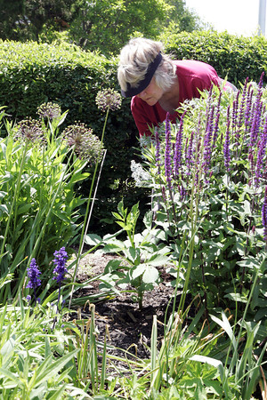 Gretchen Anderson, president of the gardening club, enjoys the beautiful weather while tending to her flowers and plants infront of the Rockport Fire Station. Photo by Maria Uminski/Gloucester Daily Times