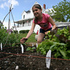 Jillian Gross, 11, weeds the garden she and her mom, Linda, are growing as part of the Backyard Growers program. Photo by Kate Glass/Gloucester Daily Times