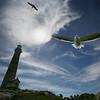 Thacher Island Seagull Control