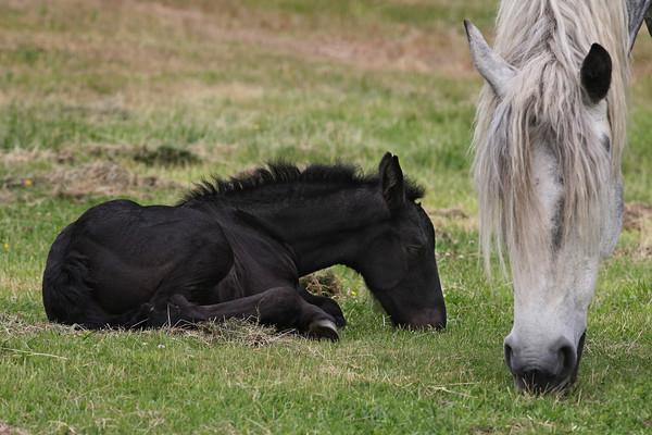 Three Foals on One Farm