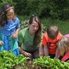 Harvesting Garden Greens