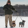 Desi Smith /Gloucester Daily Times. Connie Vallis of Essex, walks her Schnoodles Willy and Charlie along the snow covered ground at Memorial Park on Saturday morning.<br />   March 1,2014.