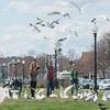 DESI SMITH/Staff photo.  Ilya Borsov (center) from Russia, but lives in Gloucester, feeds the seagulls some bread with his friends, Tinia Illariononova (left) and Kristina Kuznudsova  visiting him from Russia, Friday afternoon on Stacey Boulevard.  May 2,2014