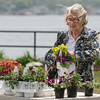 DESI SMITH/Staff photo.  Ellie Fleet of Lanesville, looks over a Superbena and Margarita plant at the GEF, Gloucester Education Foundations annual plant sale Saturday May 17th 8 to noon,on Stacy Boulevard, and was organized by Generous Gardeners. <br />  May 17,2014