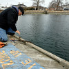 "Manchester: Joe Dunn, a contractor for the Manchester Harbormaster, ties up the first dock in Manchester Harbor so the commercial fishermen can return to work. ""A lot of guys say I'm the first sign of spring,"" he says. Dunn puts the docks back after the first full week without ice on the harbor. Photo by Kate Glass/Gloucester Daily Times Monday, March 16, 2009"