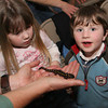 "Gloucester:  Ila Martin, 3, and Simon Dixon, 4, check out a yellow spotted salamander as the Trustees of Reservations in Cape Annhost a ""creature feature"" vernal pool Live Animal presentation Saturday evening at Ravenswood Park. Mary Muckenhoupt/Gloucester Daily times"