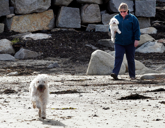 """Rockport: Patricia Guallini carries spencer down to the beach as Morgan charges straight for the water at Front Beach on Thursday afternoon. """"He's never gone for the water before,"""" Guallini says of Morgan, """"This is new."""" Photo by Kate Glass/Gloucester Daily Times"""