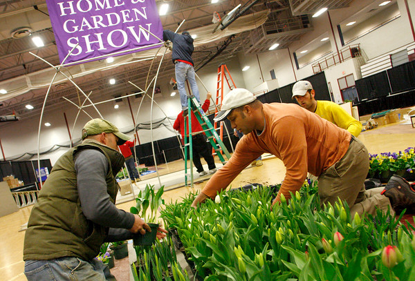 Gloucester: From left, Adam Chin, Tim Miller, and Aaron Jerome, all of Garden Concepts in Gloucester, arrange a display of tulips, pansies and hyacith flowers while setting up for the Home and Garden Show at Gloucester High School Friday afternoon.  The fifth annual Home and Garden Show hosted by the Cape Ann Chamber of Commerce will offer cooking demonstrations, children's art activities provided by Art Haven,  the Glocuester High School robotics teams and guest speakers including meteorologist David Epstein. The Home and Garden will be going on today and tomorrow 10 a.m. to 4 p.m.. Mary Muckenhoupt/Gloucester Daily Times
