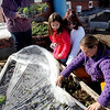 ALLEGRA BOVERMAN/Staff photo. Gloucester Daily Times. Gloucester: Lara Lepionka, lower right, of The Cape Ann Farmers Markets Backyard Growers Program, with members Antoinetta and her mother Randi Vila, center, examining the raised beds at Lepionka's house on Monday. Member Robyn McNair is at upper left. The organization will hold the second of two garden trainings this Saturday, March 31, from 9:30 to 11:30 a.m. at the Open Door, 29 Emerson Ave., (rear entrance).