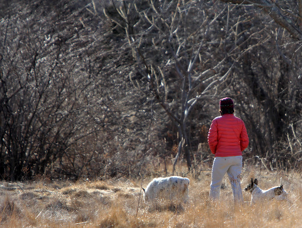 ALLEGRA BOVERMAN/Staff photo. Gloucester Daily Times. Rockport: A woman takes a walk with her dogs in a meadow along Nugent Stretch in Rockport on Tuesday.