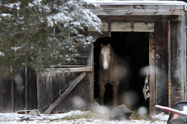 ALLEGRA BOVERMAN/Staff photo. Gloucester Daily Times. Essex: A horse is snug in its barn in Essex on Friday afternoon.