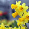 130328_GT_ABO_FLOWERS_3