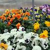 130328_GT_ABO_FLOWERS_4