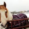 130321_GT_ABO_HORSES