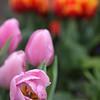 130328_GT_ABO_FLOWERS_2