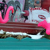 Allegra Boverman/Gloucester Daily Times. Snow clings to pink flamingos festively placed in the window box at Surfari in Manchester.